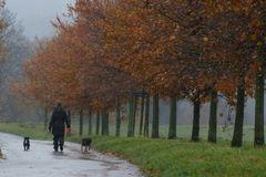 Wetter Wienhausen