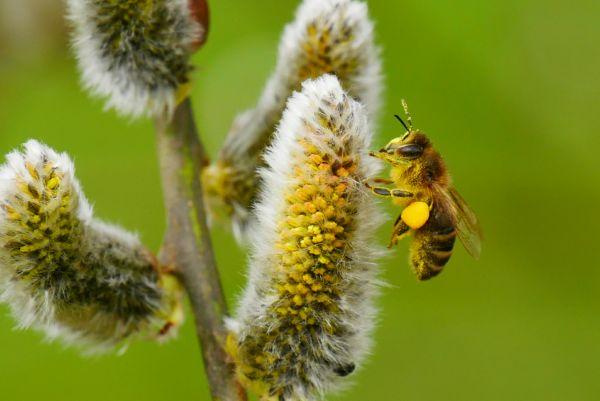 Pollenflugwetter