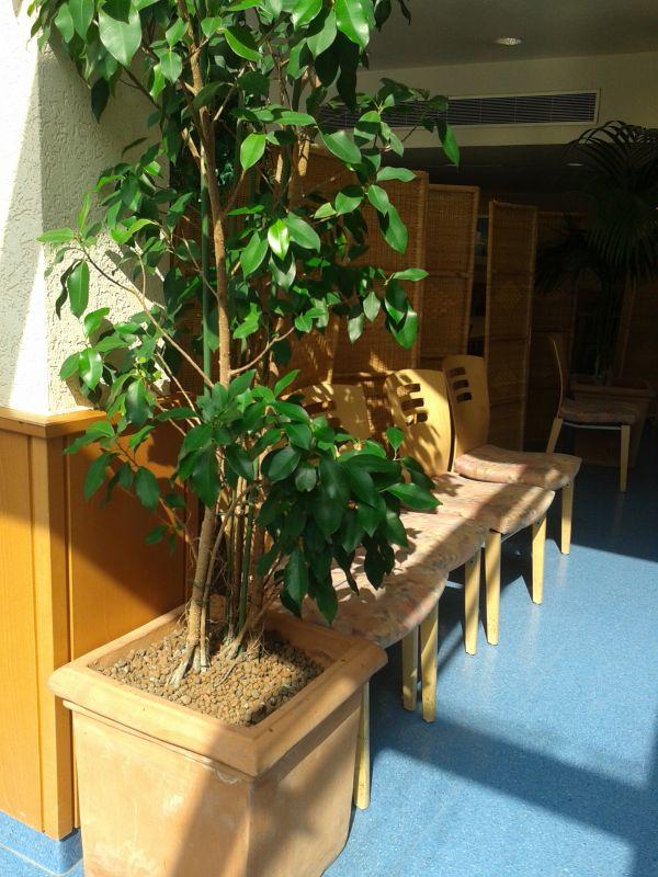 pflanzen wohnzimmer raumklima: des Wohnraumes und sorgt in jedem Fall ...